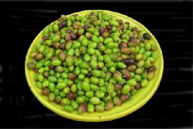 curar aceitunas sevillanas verdes